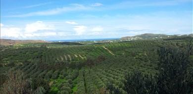Spira Dalabelos Estate - Villas with Pools in Crete, Corfu & Paros | Handpicked by Alargo